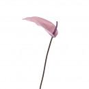 Calla Special, 1 blossom, length 77cm, purple